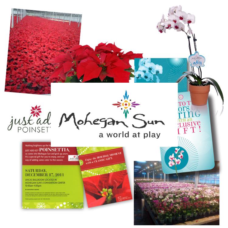 Mohegan Sun Case Study